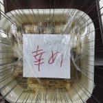 餃子の王将 近鉄山本店で幸せを頂きました(^∇^) 王将裏メニュー