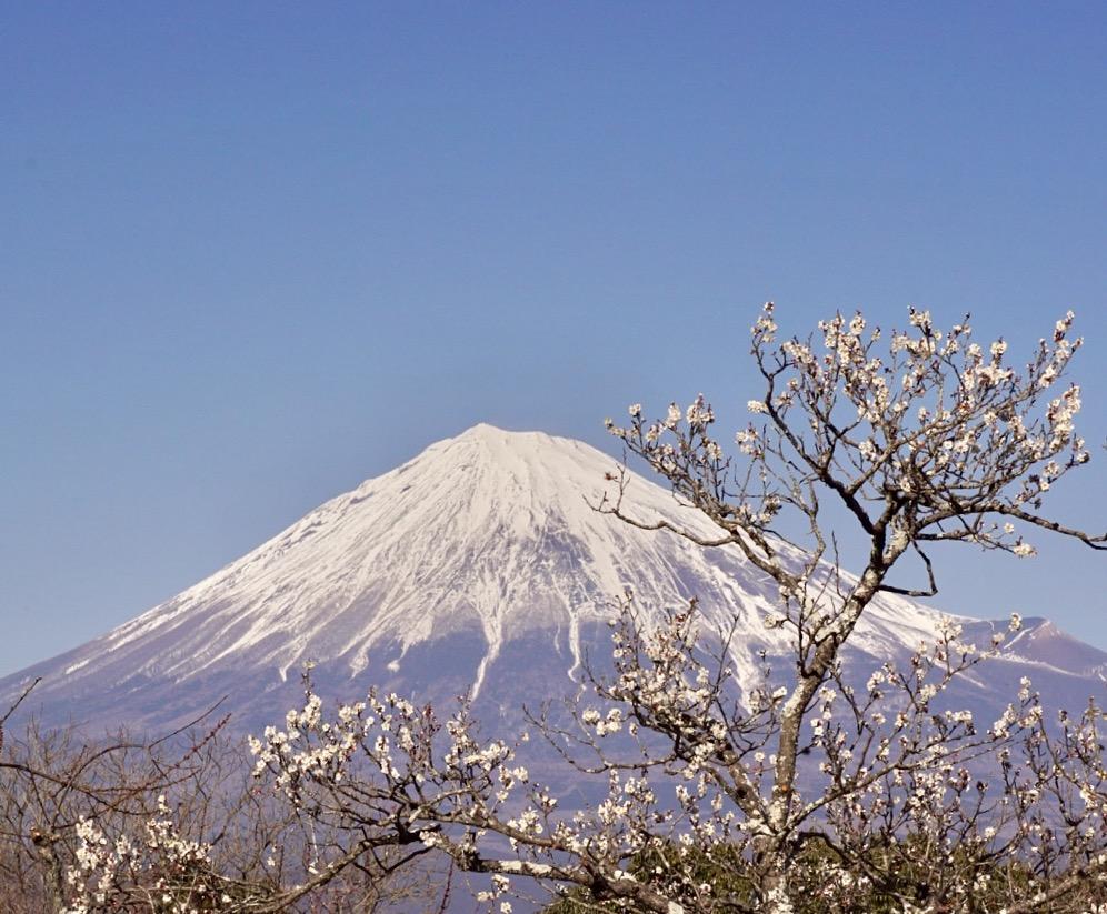 岩本山公園散策、昨日の昼間仕事の合間に岩本山公園に行ってきました。