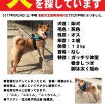 倉敷市玉島阿賀崎で犬が行方不明になりました。