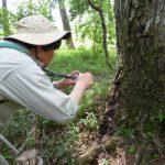 【大人の自然観察会】粘菌の観察をしてみませんか