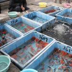 観賞魚春の展示大即売会が開催されます