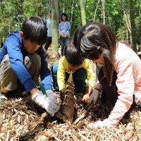 【春を探して!】自然観察とタケノコ掘りを楽しもう!