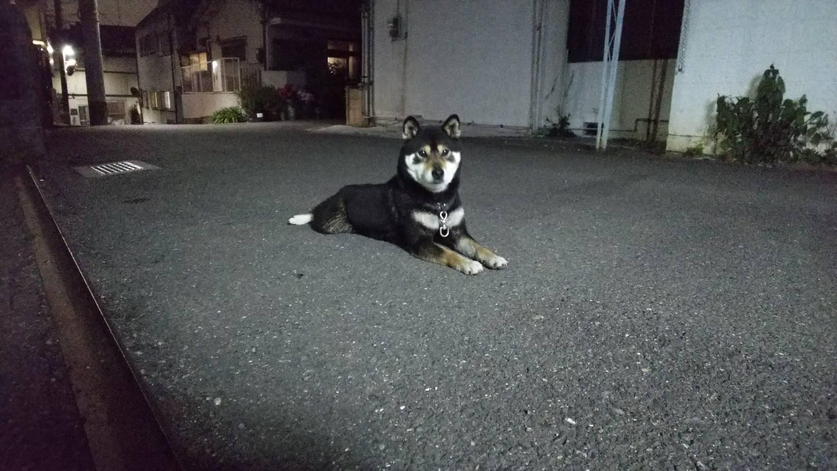 黒の柴犬を四條畷警察署に保護して貰いました。