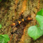野外の危険学習講座・ハチへの対処法
