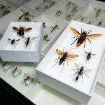 自然史講座「ハチの見分け方」