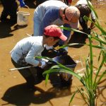 里山体験教室「ため池のかいぼりをしよう!」