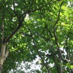 緑化講座「庭に日陰をつくる樹木選び」