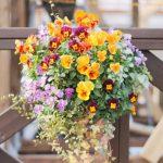 春まで楽しむ壁掛け花壇「ハンギングバスケット」参加者募集