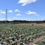 第9回農と里山シンポジウム開催!!