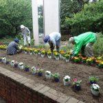 大宮第二公園に花を植えよう!