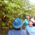 名栗シニア自然塾オープニング講座
