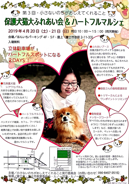保護犬猫ふれあい会のお知らせです。